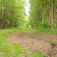 Wietmarschen- Moor (Quelle: Maria-Theresia Berling/ privat)