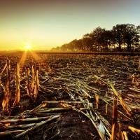 Morgensonne zwischen Wietmarschen und Lohne (Quelle: Ralf Prigge/ privat)