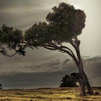 Wachholderbaum (Quelle: Silke Eilders/ privat)