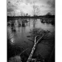 Moor bei Haren (Quelle: Ralf Prigge/ privat)